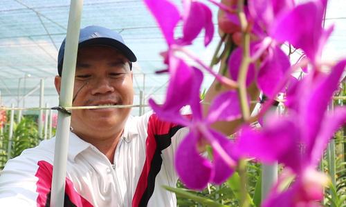 Vườn lan Mokara 7.000m2 của nông dân Sài Gòn.