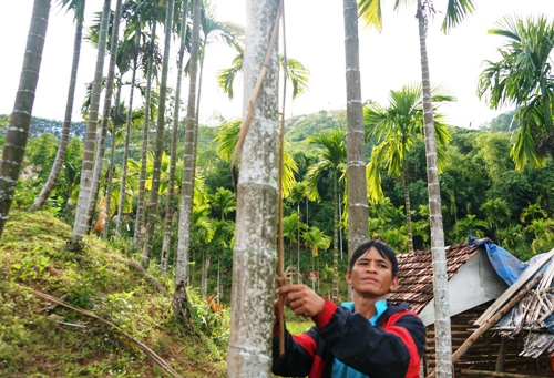 Anh Đinh Văn Thành bên cây cau được tròng hai thanh nứa. Ảnh: Phạm Linh.