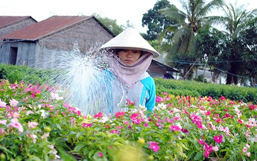 Người dân Sa Đéc chăm sóc hoa kiểng. Ảnh: Long Hồ