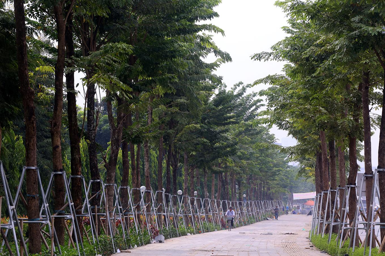 Đường Phạm Văn Đồng sau khi chặt hạ hàng xà cừ cổ thụ