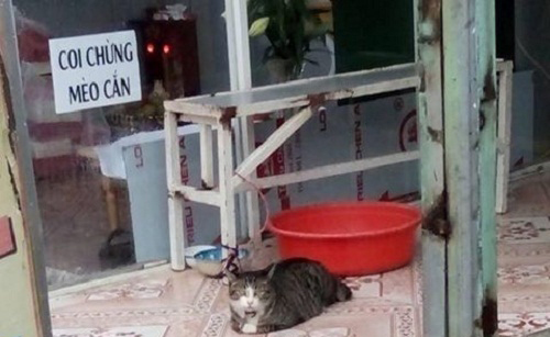 Nhà có mèo dữ nhé.