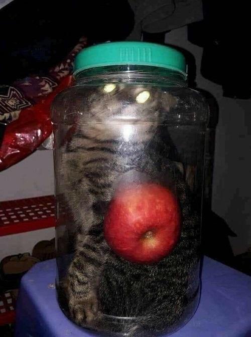 Táo mèo chuẩn không cần chỉnh.