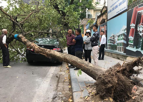 The tree is at the corner of Nha Chung Street. Photo: Huu Quang.