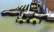 Công viên nổi làm từ rác thải tái chế