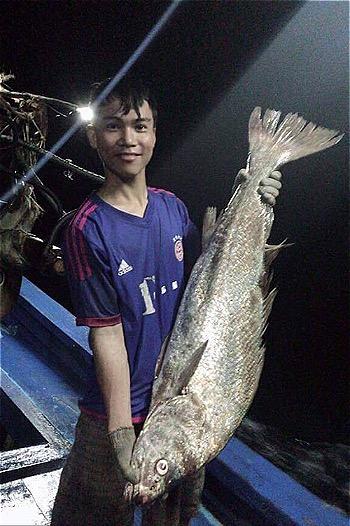Con cá sủ vàng dài 1,1 mét do ngư dân Cửa Việt đánh bắt được. Ảnh: Hồ Tuấn
