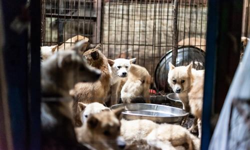 Chó bị nhốt trong khu giết mổ Taepyeong-dong. Ảnh: Koreandogs.org