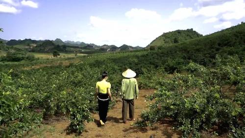 Lão nông U70 làm giàu trên đất sương muối nhờ trồng xen canh - 1