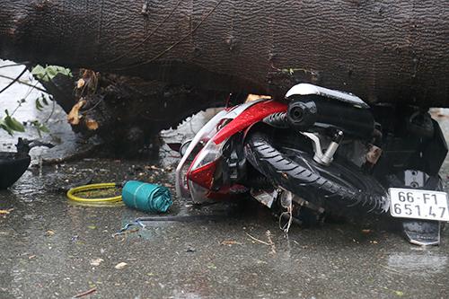 Chủ xe máy bị thương nặng do cây đổ trúng. Ảnh: Phạm Duy.