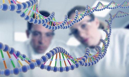 Các mã vạch di truyền cho thấy loài người có nguồn gốc từ một cặp bố mẹ. Ảnh: Paul Gault.