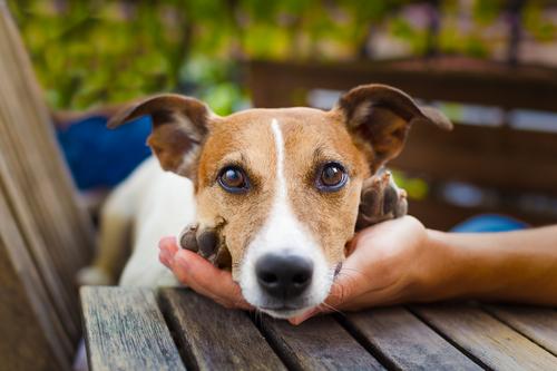 Quỹ ủy thác thú nuôi giúp đảm bảo vật cưng nhận được sự chăm sóc tốt nhất.