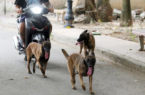 Chó thả rông, không đeo rọ mõm trong công viên Tuổi trẻ, Hà Nội trở thành nỗi sợ của không ít người qua lại. Ảnh: Tất Định.