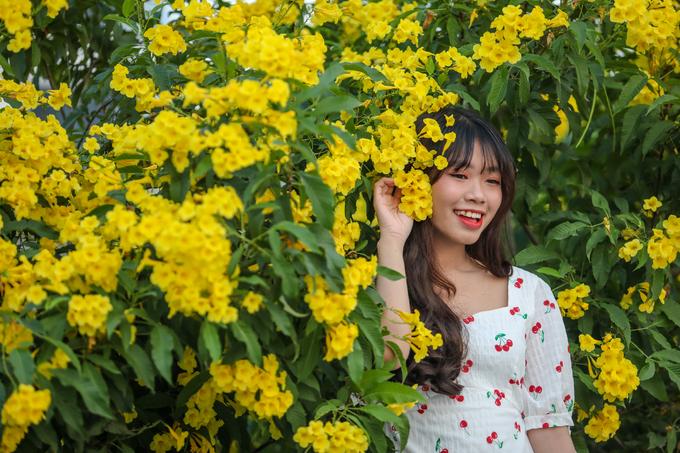 Người Sài Gòn đổ xô tới vườn hoa hoàng yến 1.000 m2