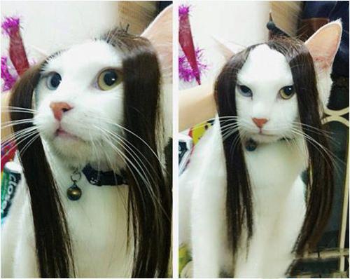 Quý cô mèo/