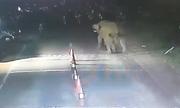 Voi nổi điên đuổi nhóm cảnh sát Ấn Độ bỏ chạy