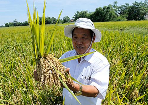 GS Trần Duy Quý bên giống lúa NPT3. Ảnh: Loan Lê.