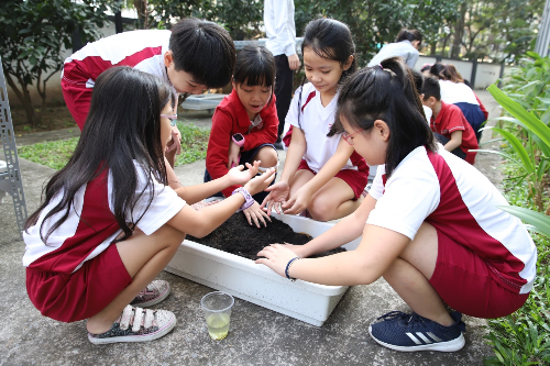 Để trồng được cây, học sinh Gateway phải tìm ra các cách giúp hạt giống nhanh nảy mầm và làm sao để cây phát triển mạnh khỏe.