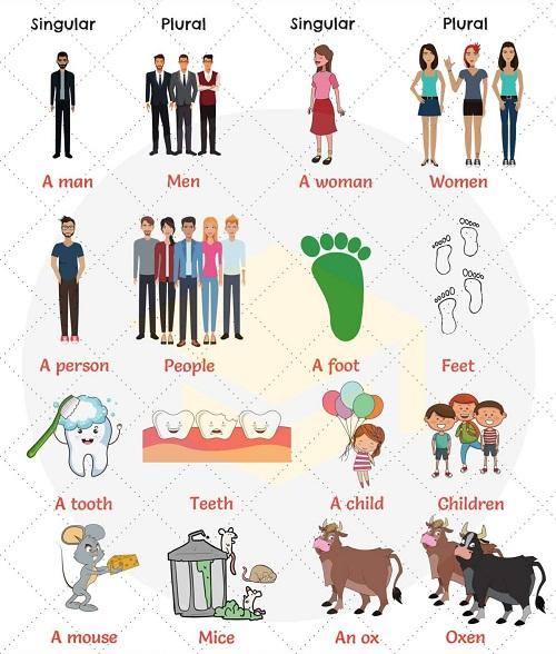Danh từ số nhiều bất quy tắc trong tiếng Anh