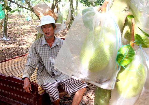Ông Thương đưa giường vườn mít ngủ để canh trộm. Ảnh: Nguyễn Khoa