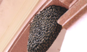 Tại sao nhiều người rất sợ ong đến nhà làm tổ?