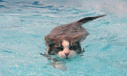 Tại sao loài mèo lại sợ nước?