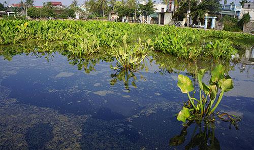 Ước tính khoảng 5 ha đồng ruộng ở Quảng Hưng bị dầu loang ra gây ô nhiễm nặng. Ảnh: Lê Hoàng.