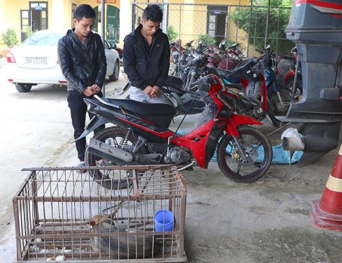 Hai anh em đi trộm chó, mỗi đêm kiếm chục triệu đồng