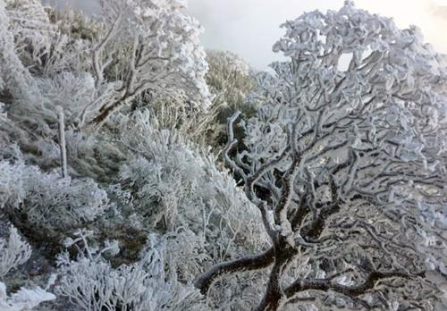 Băng tuyết phủ trắng cây cối ở khu vực rừng Hoàng Liên (Sa Pa) cuối năm 2017. Ảnh: Chiến Nguyễn.