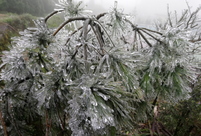 Cây cỏ Mẫu Sơn huyền ảo trong băng giá