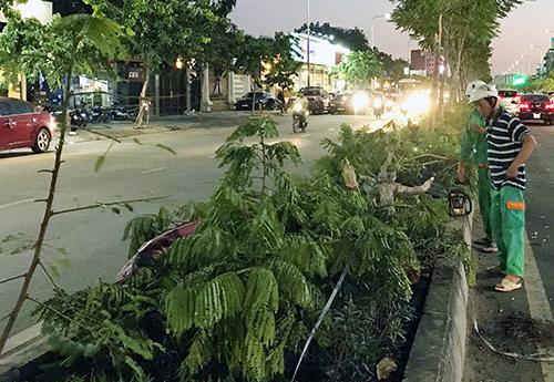 Ôtô tông đổ hàng cây xanh, lao qua đường. Ảnh: Sơn Hoà.