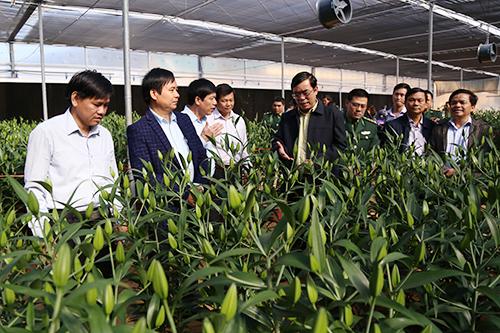 Lãnh đạo tỉnh Quảng Trị thăm vùng trồng hoa ly ly ở đèo Sa Mù. Ảnh: Hoàng Táo