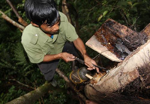 Sau khi lấy xong rượu, anh Zênh đục vào thân cây để nước chảy ra. Ảnh:Đắc Thành.