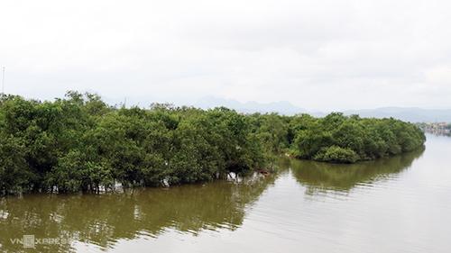 Cánh rừng bần xanh ngát bên dòng Kiến Giang. Ảnh: Quảng Hà