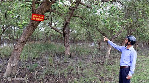 Cánh rừng phòng hộ được giao các cựu chiến binh hai thôn bảo vệ.Ảnh: Quảng Hà