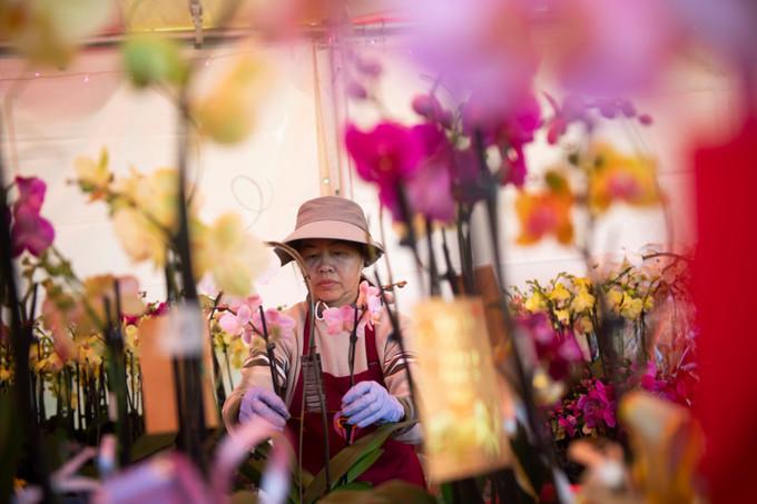 Chợ hoa Tết rực rỡ ở Little Saigon