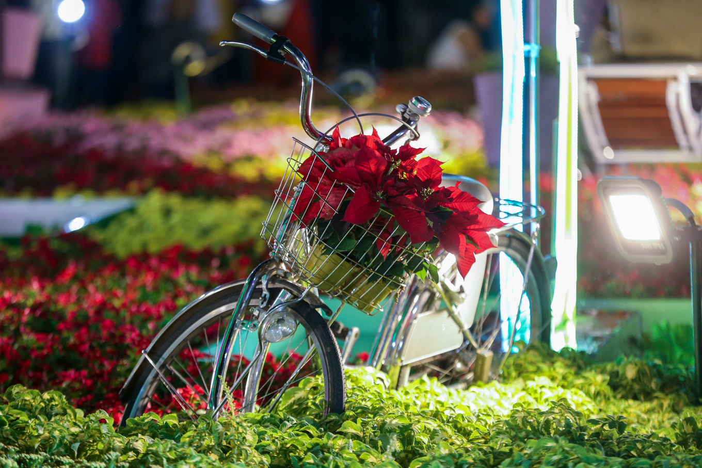 Đông nghịt người dân tham quan đường hoa Nguyễn Huệ