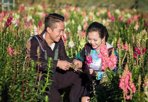 Đỉnh Fansipan (Lào Cai)cao 3.143 m tràn ngập nắng, đôi trẻ chụp ảnh giữa vạt hoa nở rộ. Ảnh: CTV