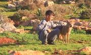 Sói kết bạn và giúp người dân chăn cừu ở Libya