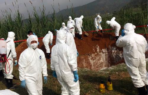 Cơ quan chức năng diễn tập ngăn chặn dịch tả lợn châu PhiPhi xâm nhiễm vào Việt Nam tại Lào Cai cuốn năm 2018. Ảnh: Bộ NN.