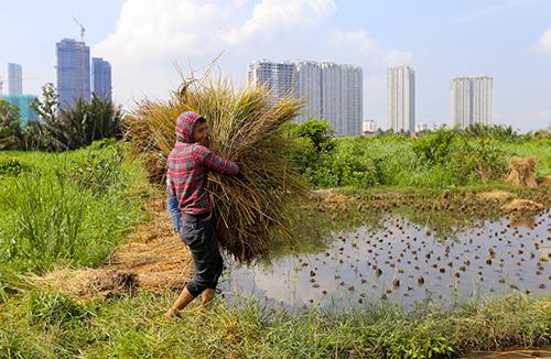 Người dân bán đảo Thanh Đa sống như ở miền quê dù cách trung tâm Sài Gòn chừng 3 km. Ảnh: Quỳnh Trần.