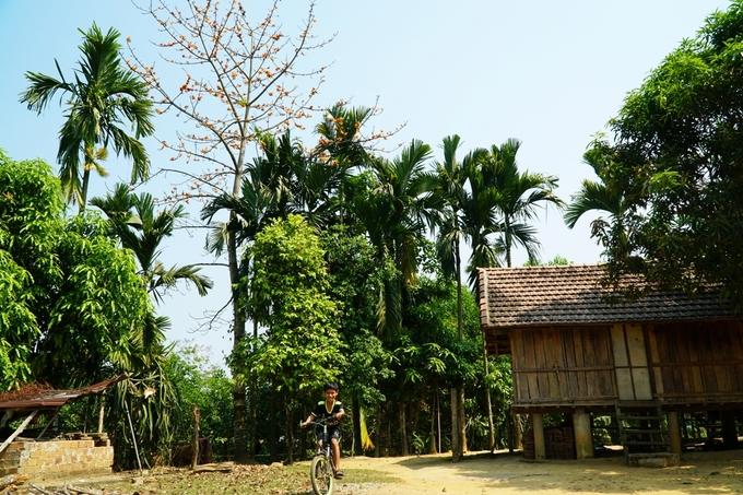Núi rừng Quảng Ngãi bừng sáng màu hoa gạo