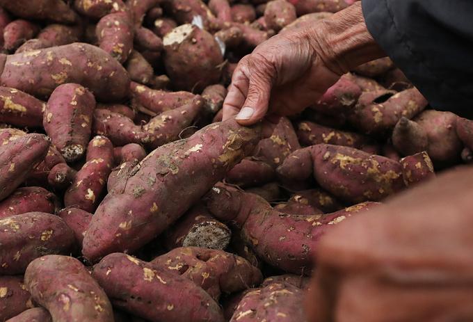 Cộng đồng tình nguyện 'giải cứu' hàng trăm tấn khoai lang