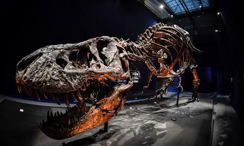 Bộ xương sẽ sớm được trưng bày tại Bảo tàng Hoàng gia Saskatchewan. Ảnh: PressForm.