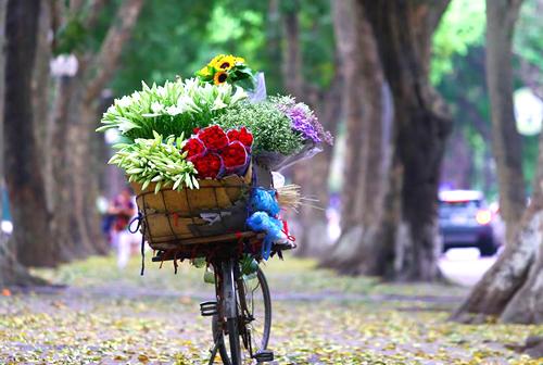 Tháng 4, hàng sấu ở Hà Nộirụng lá, hoa loa kèn nở rộ. Ảnh:Phạm Dự