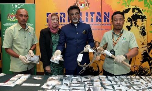 Malaysia bắt hai nghi phạm người Việt săn trộm gấu, hổ - ảnh 1