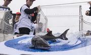 Trung Quốc thả 700 con cá tầm long cực kỳ nguy cấp ra tự nhiên