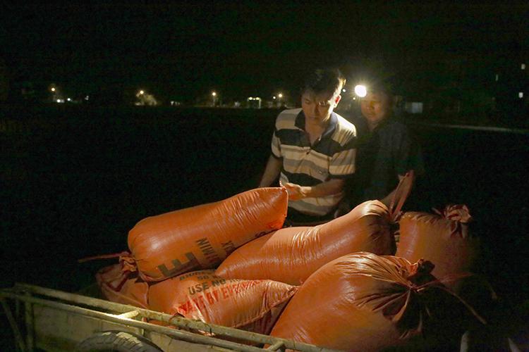 Nông dân chở nhiều bì tải đựng lúa đem về nhà phơi. Ảnh: Đức Hùng