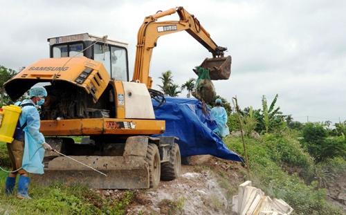3 ngày vớt trên sông, lực lượng chức năng huyện Vĩnh Bảo đã thu gom được hơn 200 xác lợn chết dịch có trọng lượng từ 40-100kg. Ảnh: Thái Quang