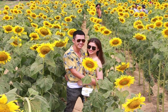 Vườn hoa hướng dương ở Huế thu hút khách đến chụp ảnh