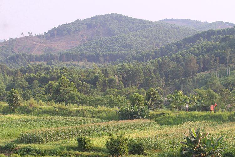 Vùng đất ở huyện Hương Sơn thích hợp cho việc trồng nguyên liệu nuôi hươu. Ảnh: Đức Hùng