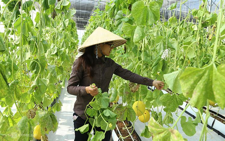 Mô hình nông nghiệp công nghệ cao ở Thanh Hóa. Ảnh: Loan Lê.
